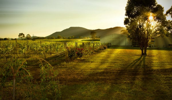 Hunter Valley Wine and Food Month
