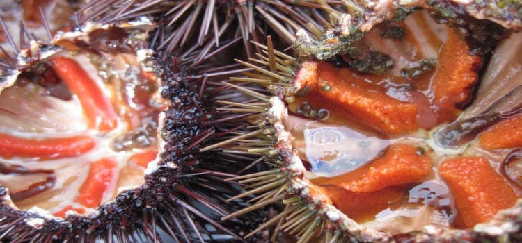 How to Eat: Sea Urchin