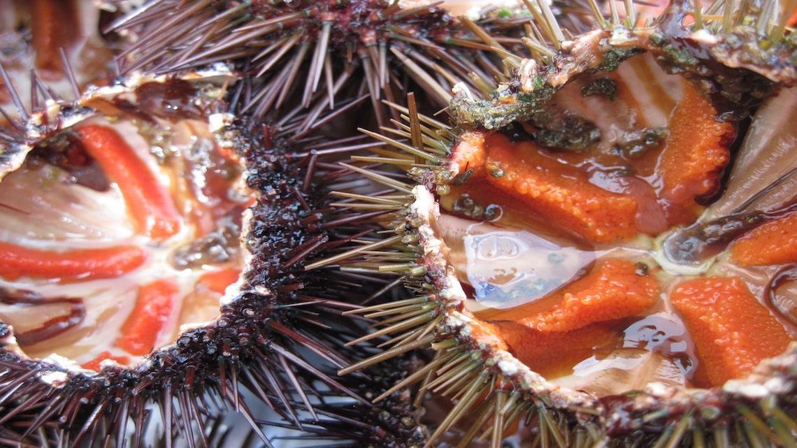 Sea urchin ?roe? consists of five orange fingers underneath a ...