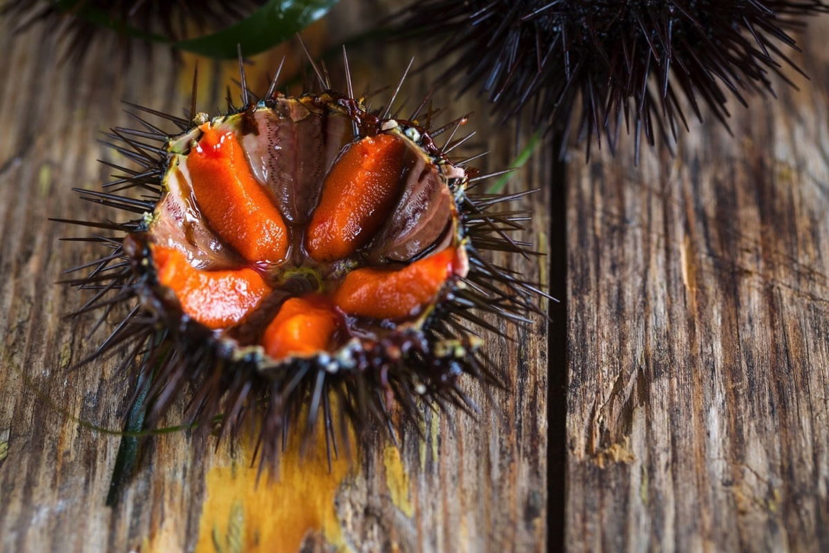 Cut open sea urchin on a wooden table.