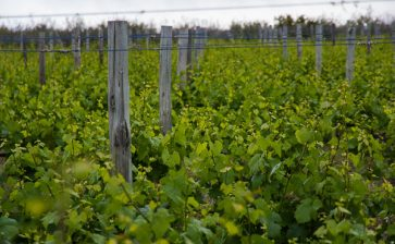 The Wines of Guadalupe Valley