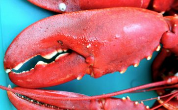 Meet You at the Maine Lobster Festival
