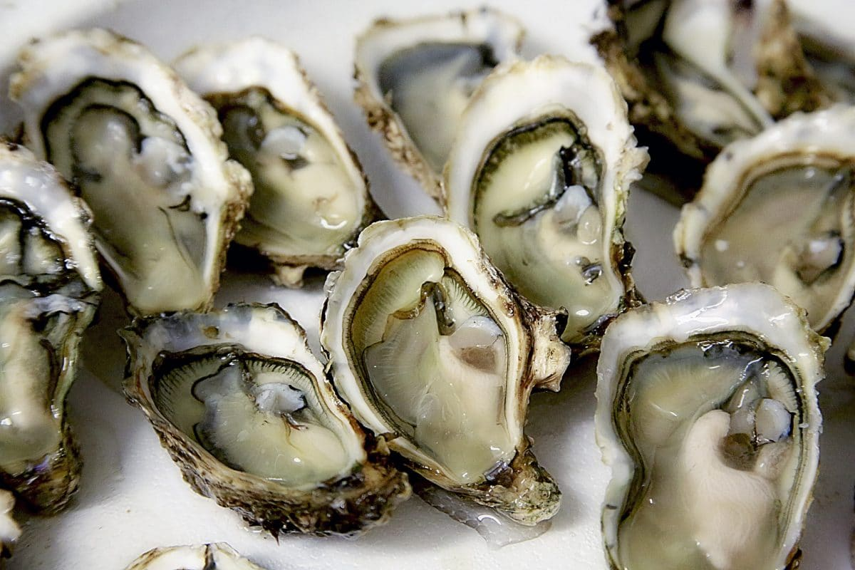 """Obviously, if you don't love life, you can't enjoy an oyster."" – Eleanor Clark"