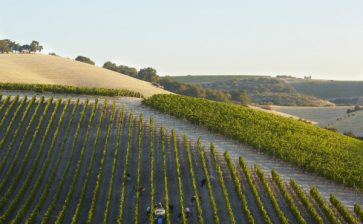 Paso Robles Harvest Wine Weekend