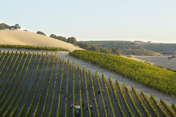 Paso Robles Harvest Wine Weekend (Photo Credit: Paso Robles Wine Country Alliance)