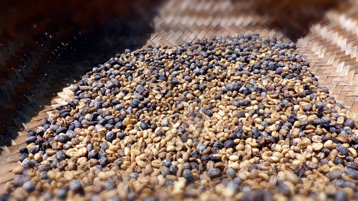 Luwak coffee beans dry slowly in the sun. (Photo Credit: Christine Cognieux)