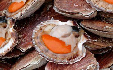 How to Eat: Saint-Jacques Shells