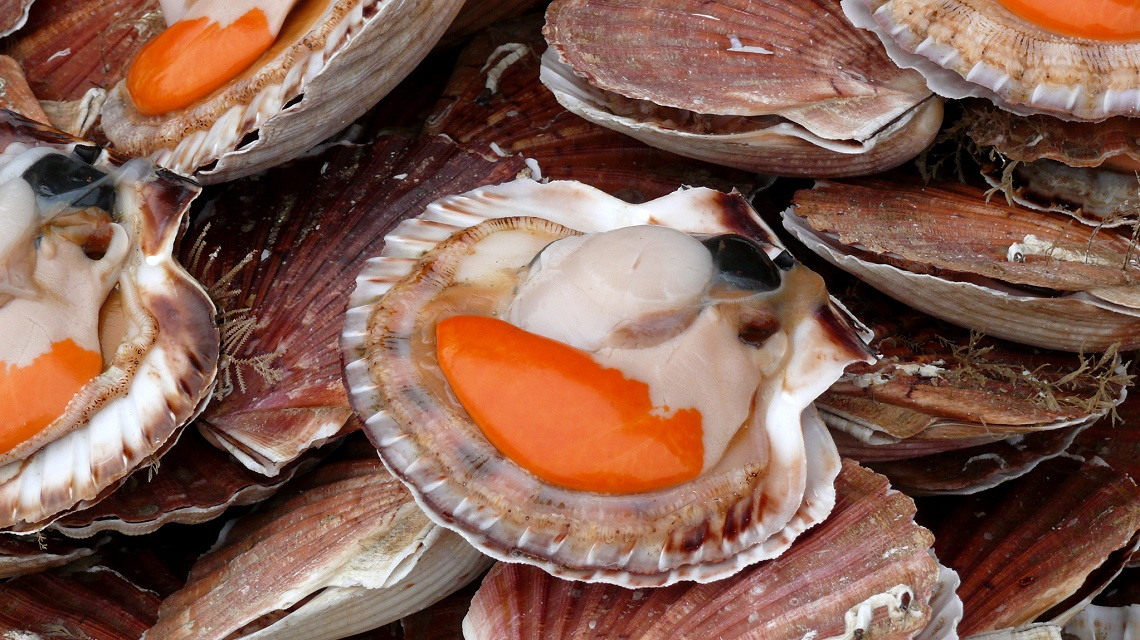 Fresh Saint-Jacques shells with big corals are a seafood lover's delight. (Photo Credit: Coquille Saint Jacques, Trouville by Flickr user david__jones, size of the original image has been adapted)