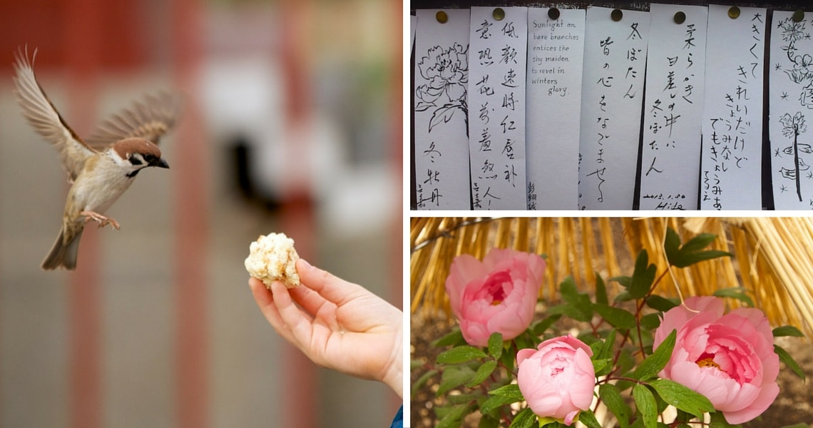 Whether you feed the birds, gaze at the delicate peonies under their straw-umbrella or pin your personal wish, Ueno Park is a lot of fun. (photo credit: Yann Cognieux)