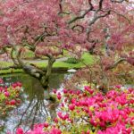 A Story of a Japanese Garden and Bees