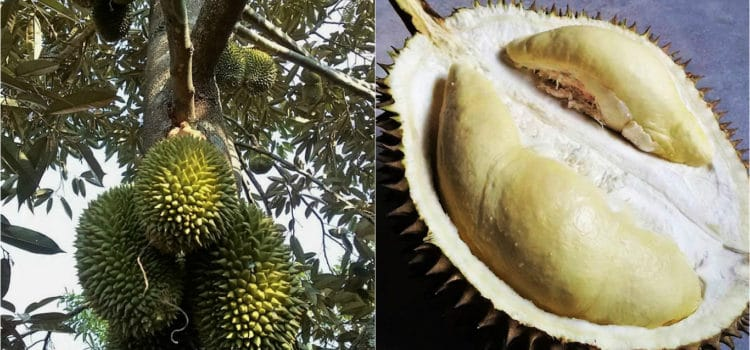 How to Eat: Durian