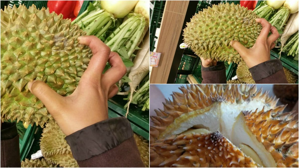 How to hold a durian and to know if it's ripe. When it's ripe, you can see a lane cracking on the bottom center of the fruit. (Photo Credit: Nimas Norma & Halm Ttang)