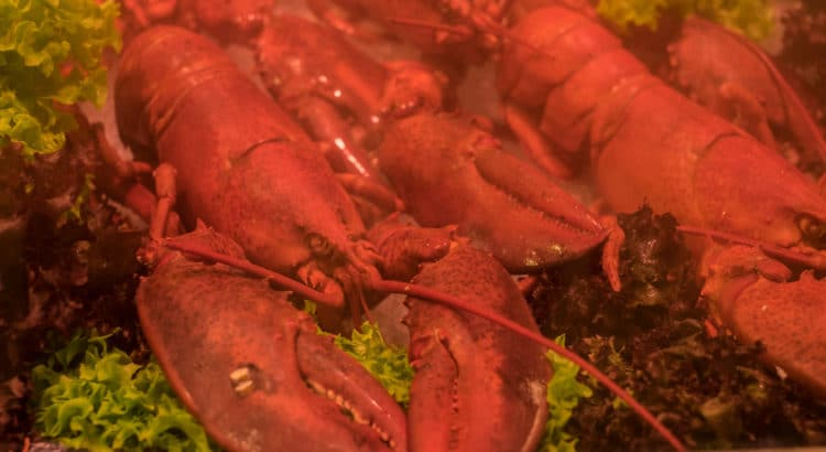How to Eat: Lobster