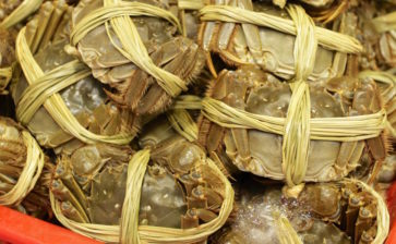 How to Eat: Hairy Crabs
