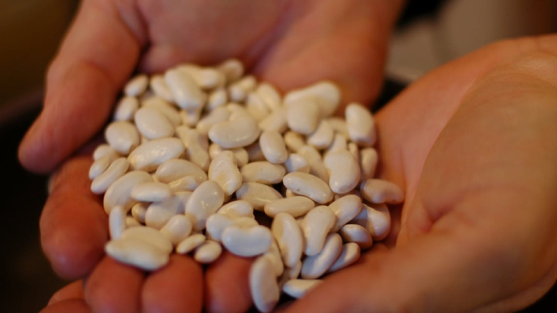 Traditional beans for cassoulet (Photo Credit: Tarbais beans for cassoulet by Flickr User travelingmcmahans, original image has been updated)