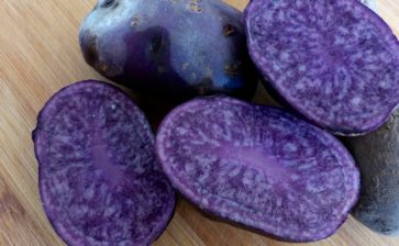 Food Postcard: Seeing Blue with Colored Potatoes