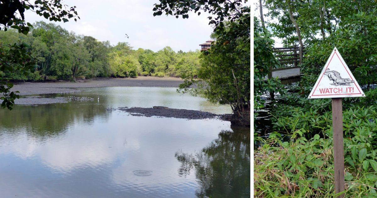 Tired of the urban scene? Take a breathing stroll in the remarkable Sungei Buloh Wetland Reserve. (Photo Credit: Christine Cognieux)