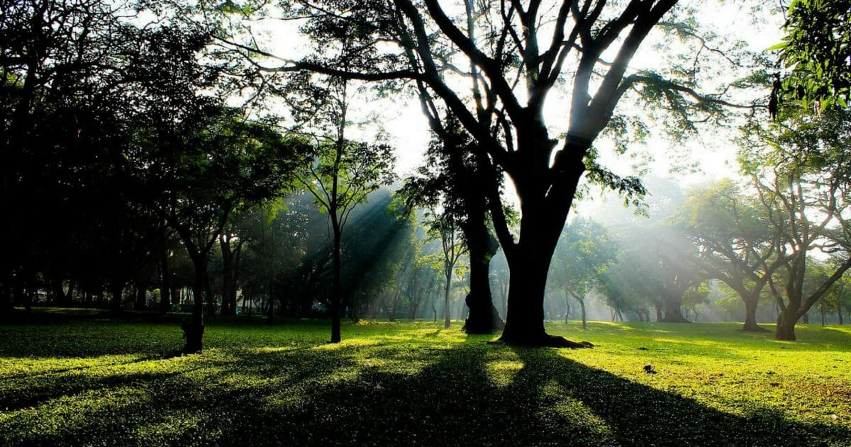 Cubbon Park sprawls over an area of 300 Acres. (Photo Credit: Voyager)
