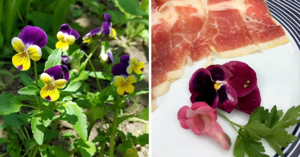 Panies in bloom and on a plate with ham